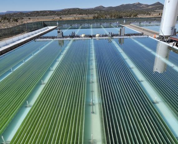 Planta de cultivo de microalgas para producir biocombustibles