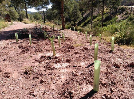 Proyecto de reforestación en España. Crédito: Juan Antonio Pellicer Alcaraz