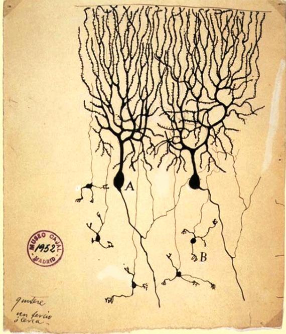 OpenMind-ventana-neuronas-dibujo-nobel-ramon-y-cajal