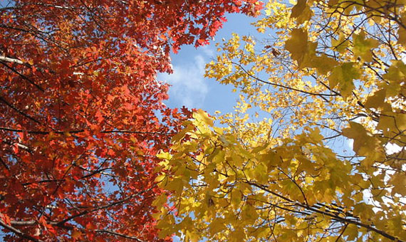 OpenMind-Ventana-reportaje-colores-del-otoño-europa-norteamérica