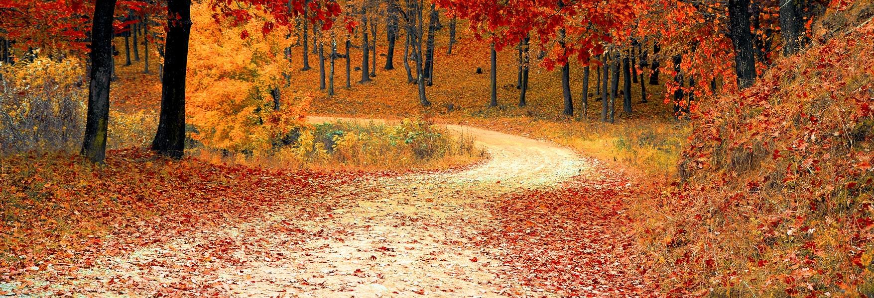 ¿Por qué el otoño es amarillo en Europa y rojo en Norteamérica? - OpenMind