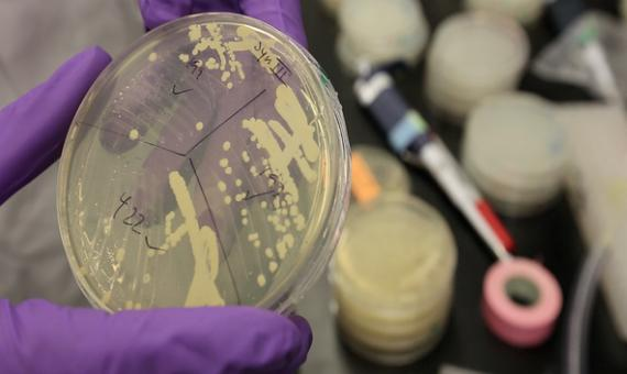 6-bbva-openmind-ventana-ciencia-2014-hitos-cromosoma