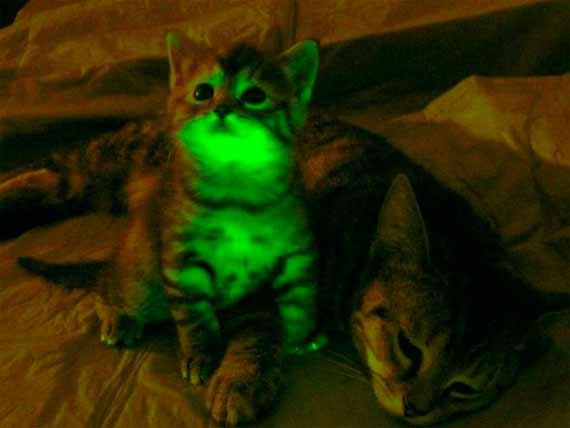 bbva-openmind-manuel-rejon-gato-fluorescente