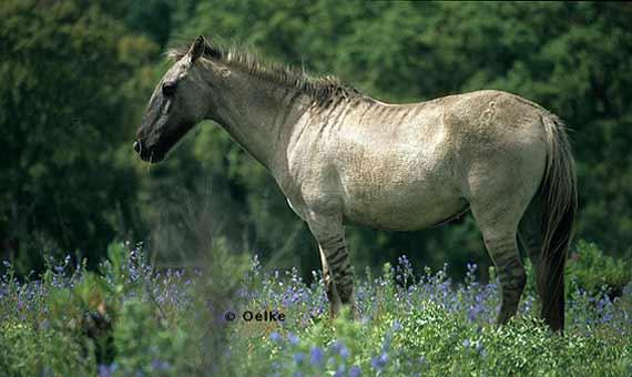 bbva-openmind-manuel-rejon-zebra-caballo