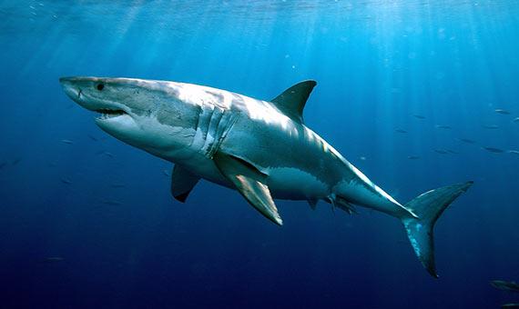 bbva-openmind-ventana-3-tiburon