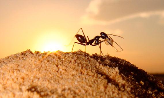 bbva-openmind-ventana-4-hormigas