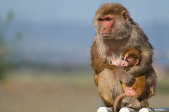 bbva-openmind-ventana-7-macacos