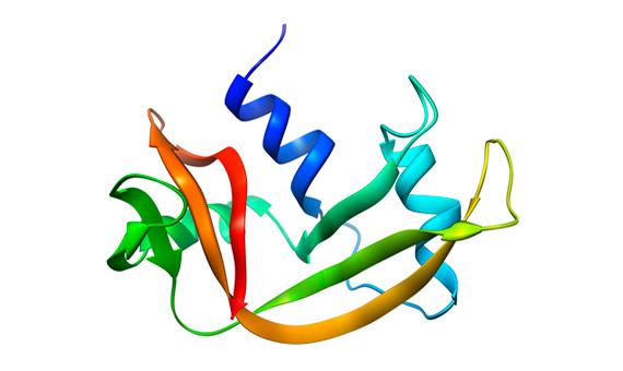 Estructura 3D de la molécula de ribonucleasa estudiada por Anfinsen. Crédito: Vossman / UCSF Chimera