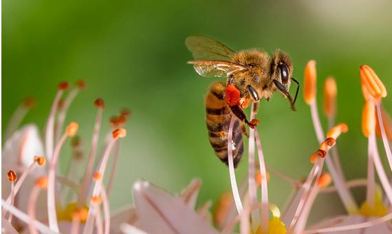bbva-openmind-i-ambiente-abejas