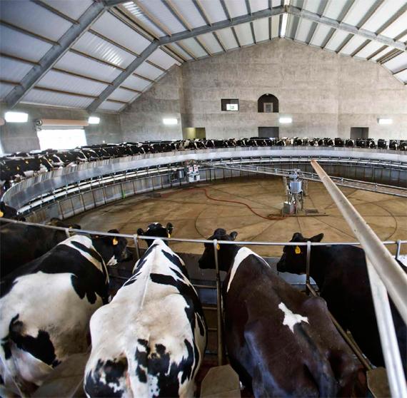 BBVA, OpenMind. Ingeniería humana para frenar el cambio climático. Liao. Sala de ordeño rotatorio en una granja de leche de California, Estados Unidos