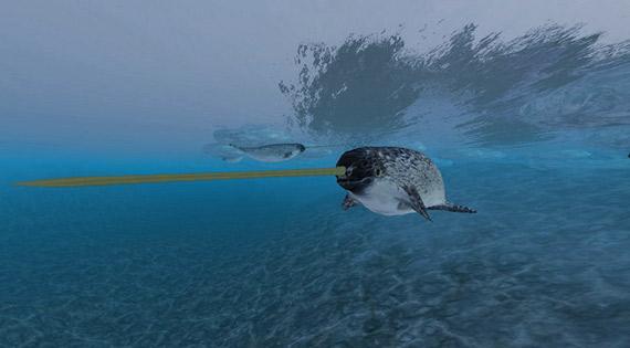 El narval caza gracias a la precisión del sonar que tiene en su apéndice frontal. Crédito: Torley/Flickr