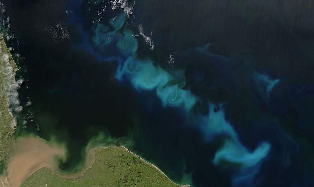 Florecimiento de fitoplancton en el océano Atlántico Sur, frente a las costas argentinas. Crédito: NASA