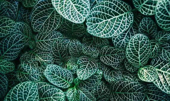 2_Plantas