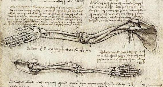 Dibujo de Leonardo da Vinci sobre los movimientos realizados por el bíceps (1510). Crédito: Wikimedia Commons