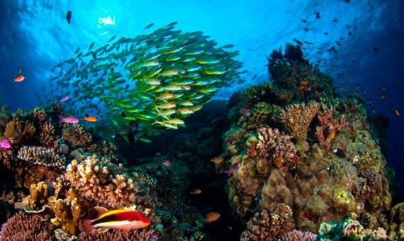 1_Barrera-de-coral