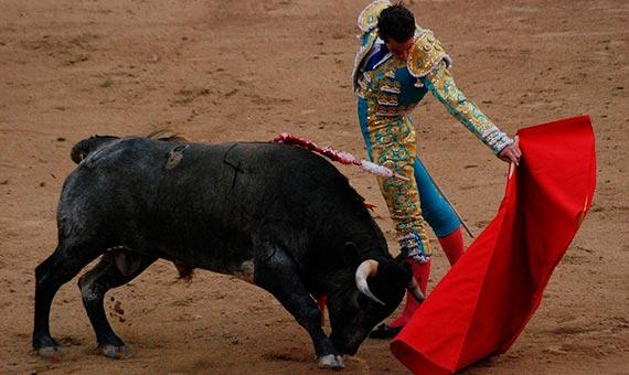 Los toros no distinguen específicamente el rojo de otros colores. Crédito: Marcus Obal