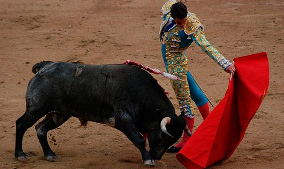 Bulls do not specifically distinguish red from others tones. Credit: Marcus Obal