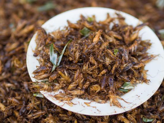 Los insectos son ricos en proteínas, ácidos grasos insaturados, aminoácidos, vitaminas, hierro y otros minerales. Crédito: Takeaway