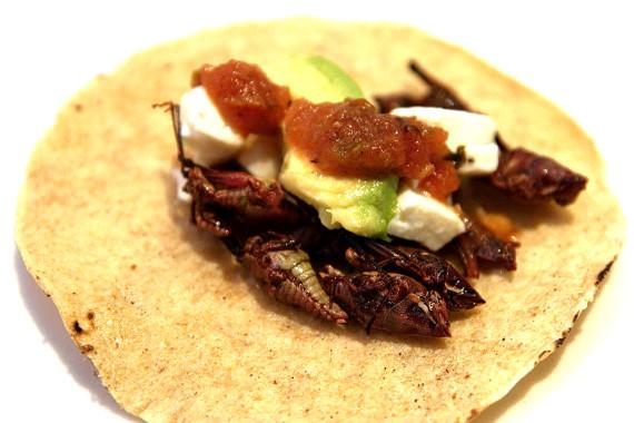 Freír o cocinar suele reducir los niveles de bacterias en los insectos. Crédito: William Neuheisel