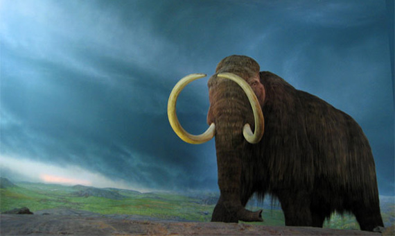 Mammoth reconstruction in The Royal British Columbia Museum in Canada. Credit: Rob Pongsajapan