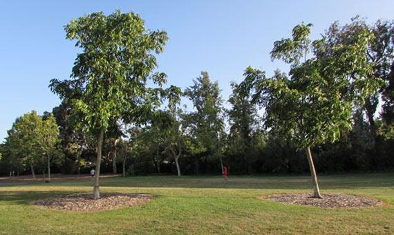Natalie Jeremijenko, One Tree(s) (1998-), la artista desarrolló cien árboles con la misma información genética que después plantó por parejas en distintos lugares de San Francisco para evidenciar el diferente modo en que se desarrollaban.