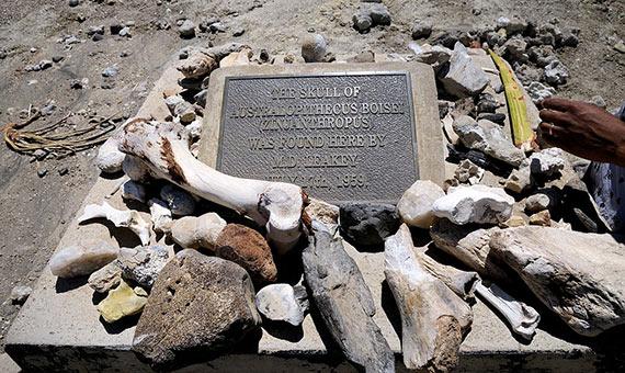 Placa del descubrimiento del craneo de Australopithecus en el área de Olduvi Gorge, en Tanzania