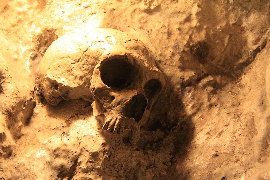 l descubrimiento de fósiles comenzó a suministrar pruebas de la evolución del ser humano a partir de otras especies. Crédito: Bjørn