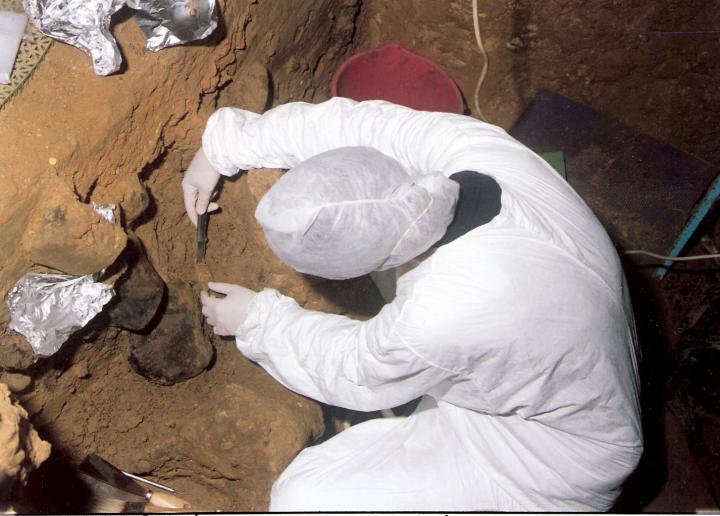 El Instituto Max Planck de Antropología Evolutiva ha obtenido ADN mitocondrial de neandertales y denisovanos del suelo de varias cuevas. Crédito: