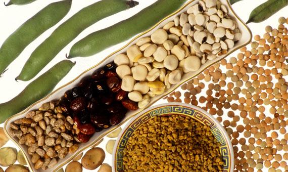 Las lectinas se encuentran en legumbres, cereales, frutos y frutos secos y hortalizas. Crédito: Keith Weller, Agricultural Research Service, USDA