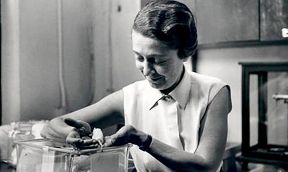 Levi-Montalcini en su laboratorio, a principios de los años 1960. Crédito: Becker Medical Library