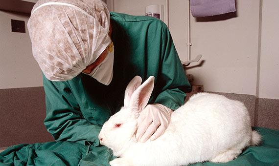 La mayoría de los países desarrollados cuentan con legislación que trata de minimizar el uso de animales de laboratorio. Crédito: Understanding Animal Research