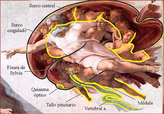 La Capilla Sixtina, ¿un tratado oculto de anatomía humana? - OpenMind