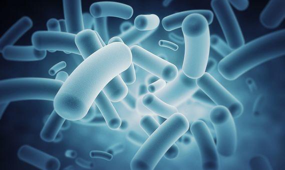 Según un reciente estudio, la microbiota afecta a casi cualquier aspecto de nuestra la salud. Crédito: IBM