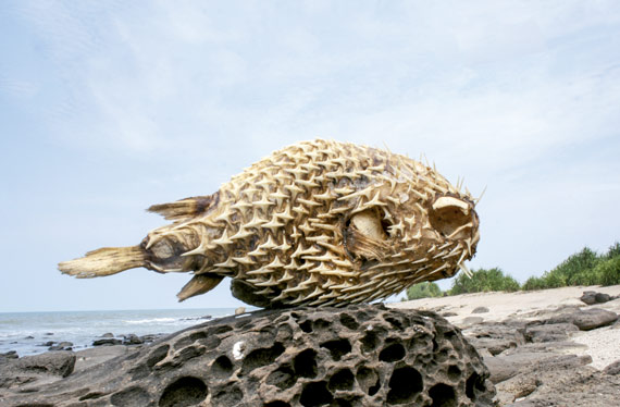 The body of a pufferfish on St. Martin's Island, Bangladesh, March 2018