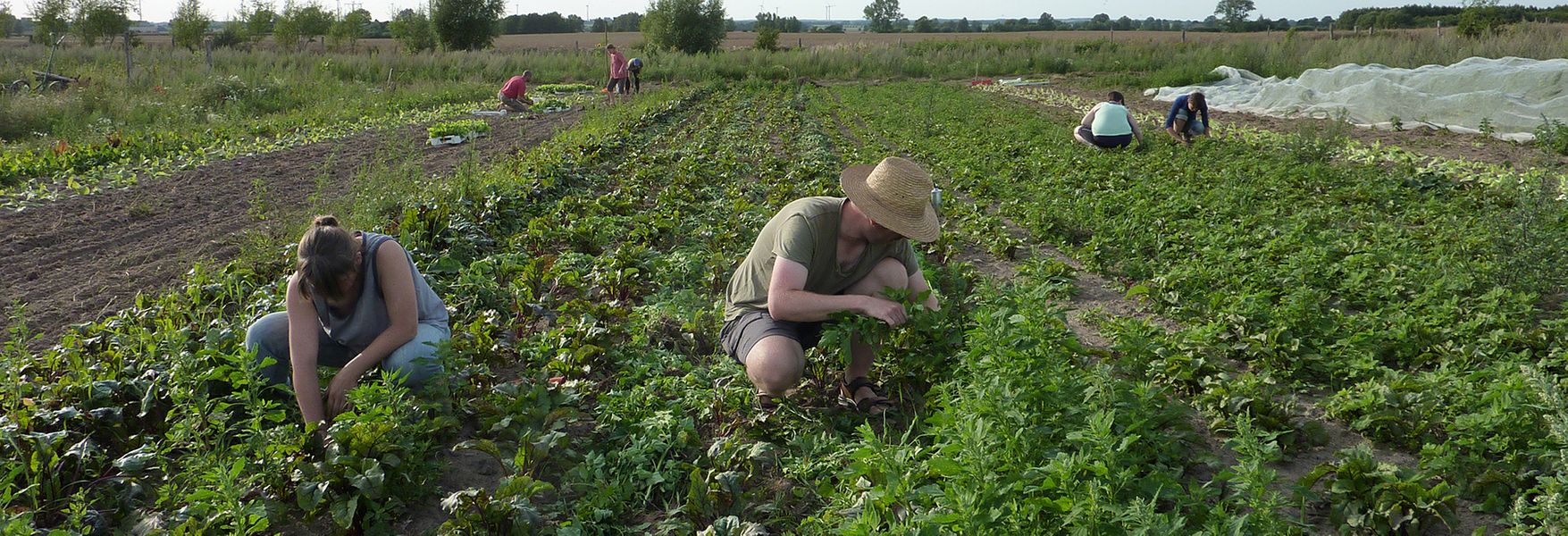 Organic Farming: Not Always So Environmentally Friendly