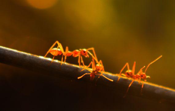 BBVA-OpenMind-Rosae Martin-Hormigas-akhil-suryajith-Los agentes de un nivel inferior adoptan comportamientos propios de un nivel superior, por ejemplo, las hormigas crean colonias