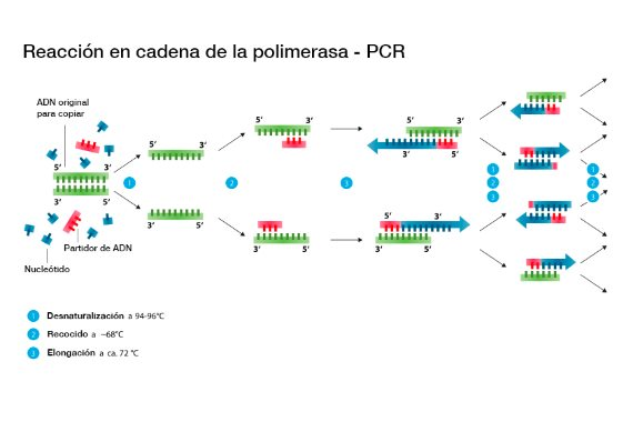 BBVA-OpenMind-Materia-Kary Mullis-PCR
