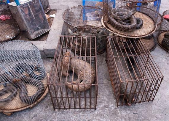BBVA-OpenMind-Javier Yanes-Los otros efectos del coronavirus- impacto COVID medioambiente 6 Las autoridades chinas han introducido normas más restrictivas sobre el comercio y el consumo de fauna salvaje. Crédito: Dan Bennett
