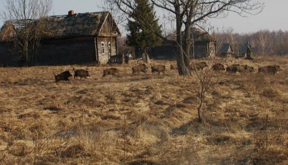 BBVA-OpenMind-Materia-Chernóbil y Fukushima, ¿nuevos santuarios de fauna-Chernobyl 3