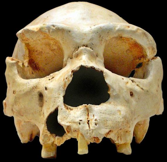 BBVA-OpenMind-Materia-La genética nos acerca al misterio del hombre de Atapuerca 2-Craneo de Homo heidelbergensis. Credit: José-Manuel Benito