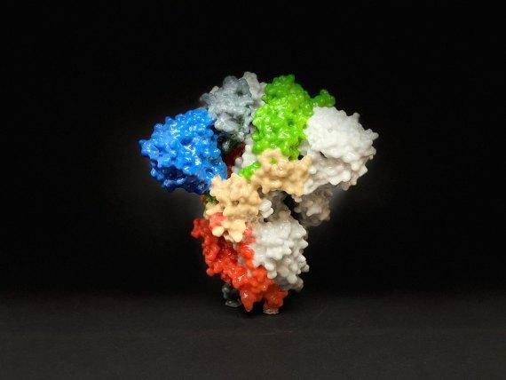 BBVA-OpenMind-Materia-Covid 19-Letalidad 3-Impresión 3D de una proteína Spike en la superficie del SARS-CoV-2. Credit: NIH