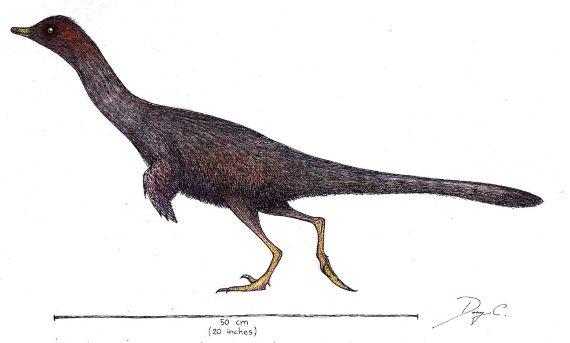 BBVA-OpenMind-Materia-Spinosaurus 4-Un Halszkaraptor. Crédito: Danny Cicchetti