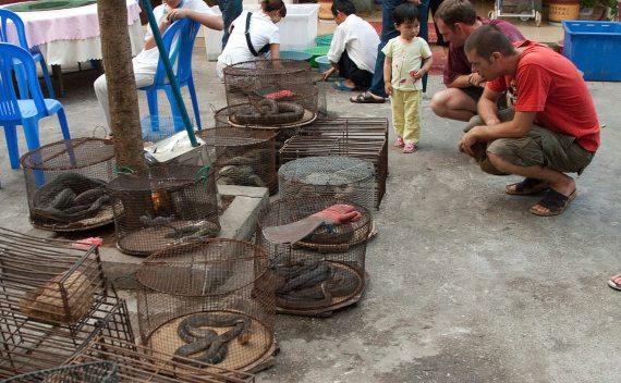 -Comercio ilícito de fauna salvaje en peligro de extinción en Möng La, Shan, Myanmar. Crédito:Dan Bennett