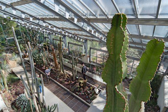 BBVA-OpenMind-Materia-Eugenia Angulo-Jardines_botanicos_3-Real Jardín Botánico de Madrid. Crédito: Antonello Dellanotte