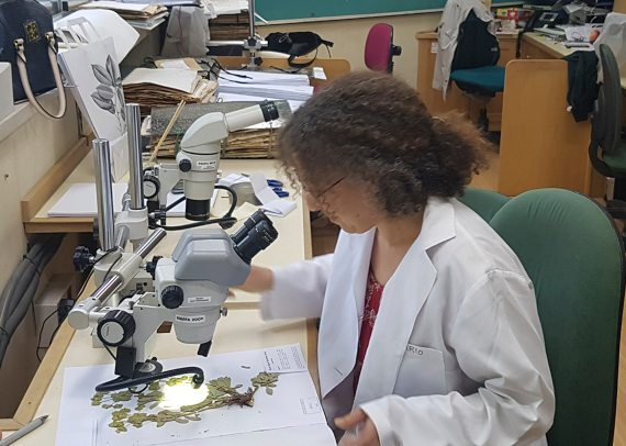 BBVA-OpenMind-Materia-Eugenia Angulo-Jardines_botanicos_4-Los jardines botánicos disponen de herbarios: colecciones de plantas o partes de plantas muertas, secadas e identificadas. Crédito: Jesús G. Rodrigo