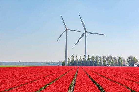 La Ley del Clima Europea establece el marco legal para llegar a la neutralidad climática en el año 2050. Imagen: Martijn Baudoin (Unsplash).