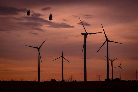 BBVA-OpenMind-Javier Yanes-Innovaciones para hacer las energías renovables más sostenibles 4-Las organizaciones ecologistas advierten de la alta mortalidad que los parques eólicos provocan entre las aves. Fuente: Pxfuel