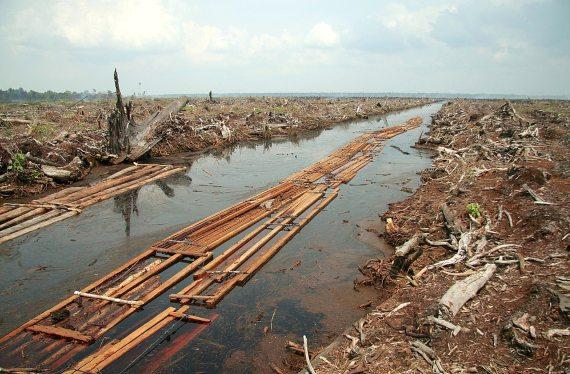 BBVA-OpenMind-Plantar árboles, estrategia controvertida contra el cambio climático-Reforestacion 2-Deforestación para plantación de palma aceitera. Crédito: Aidenvironment