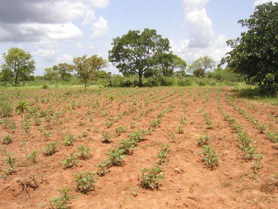 BBVA-OpenMind-Plantar árboles, estrategia controvertida contra el cambio climático-Reforestacion 4-Reforestación en Burkina Faso. Fuente: Wikimedia