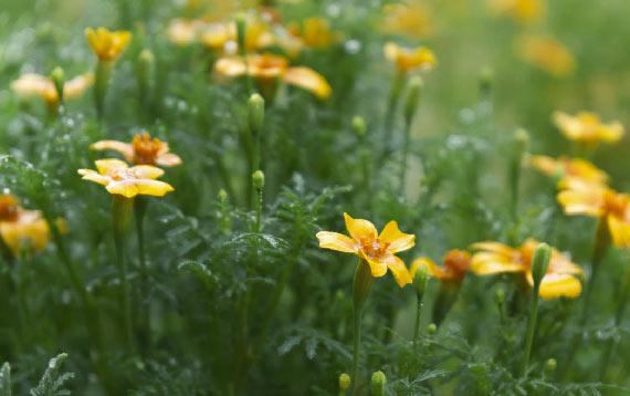 Las precipitaciones concentradas durante las semanas de confinamiento causaron una importante explosión de flores y vida en los espacios naturales. Imagen: Alexander Sinn (Unsplash)